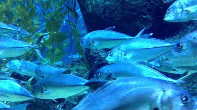 vídeos y material grabado en eventos de stock de atún - atún animal