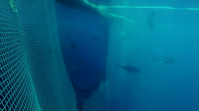 tuna's transfer from the fisherman to the buyer - fang stock-videos und b-roll-filmmaterial