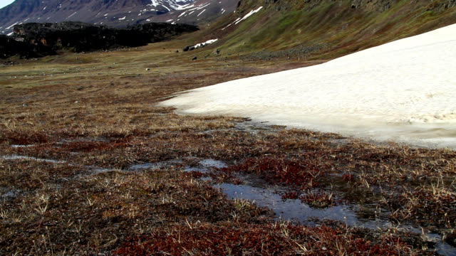 """""""tundra blooming, greenland"""" - arctic stock videos & royalty-free footage"""