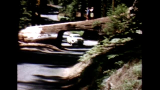 1955 tunnel log - giant sequoia stock videos and b-roll footage