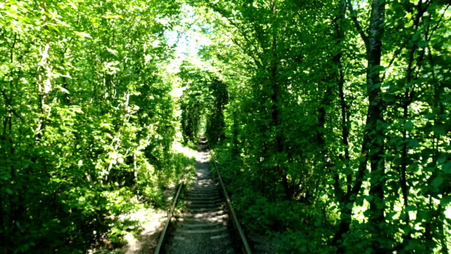 tunnel of love in summer - ukraine stock videos and b-roll footage