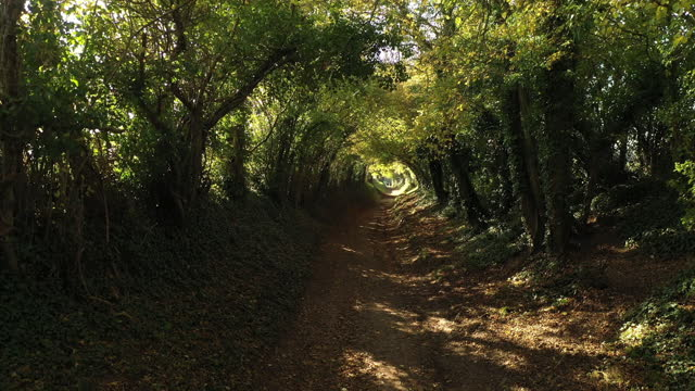 tunnel of trees in autumn, halnaker, west sussex - west sussex stock videos & royalty-free footage