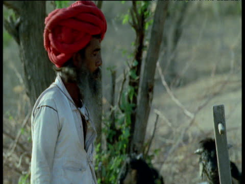 vidéos et rushes de turbaned shepherd walks towards camera, india - coiffe traditionnelle
