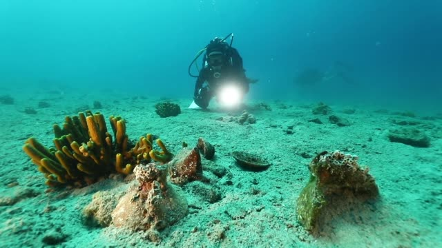 vídeos de stock e filmes b-roll de turkish scientists discovered hundreds of underwater antiques from the bronze age in turkey's southwestern mugla province. the scientists working... - arqueologia