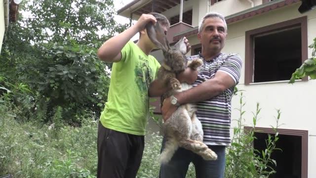 turkish teacher sinan agar owner of a oneyearold grey german giant rabbit weighing 12 kilograms speaks in an interview in hamidiye neighborhood of... - 秤点の映像素材/bロール