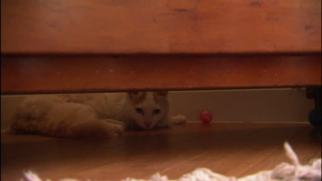 a turkish van cat  hides under a bed. - 隠れる点の映像素材/bロール