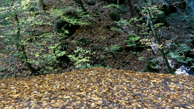 turning panoramic view of the  forest in autumn