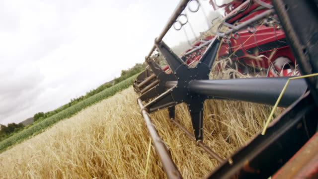 slo mo turning reel and cutter bar on the red combine harvesting wheat - harvesting stock videos & royalty-free footage