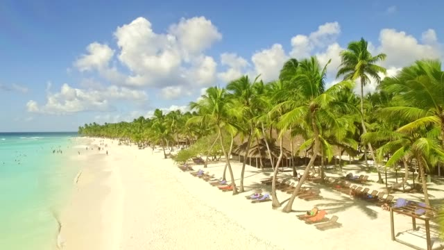 turquoise blue sea and palm trees - dominican republic stock videos and b-roll footage