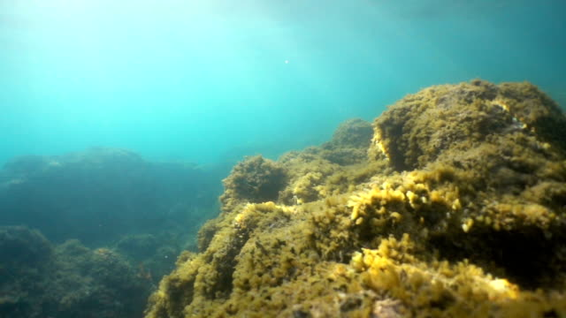 turquoise, sea bottom overgrown with lichen. oceanic flora and fauna. fish and other seabed creatures. underwater background. - turquoise background stock videos & royalty-free footage