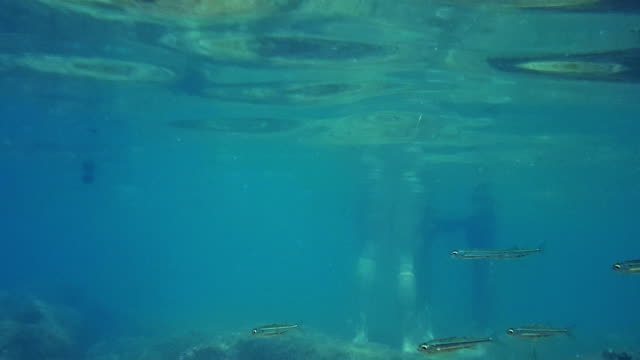 türkisfarbene unterwasserwelt des meeresbodens. sonnenstrahlen im wasser gebrochen. türkisblaues wasser. flora und fauna. - in bodenhöhe stock-videos und b-roll-filmmaterial
