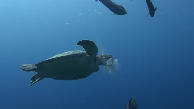 turtle and jellyfish - hawksbill turtle stock videos & royalty-free footage