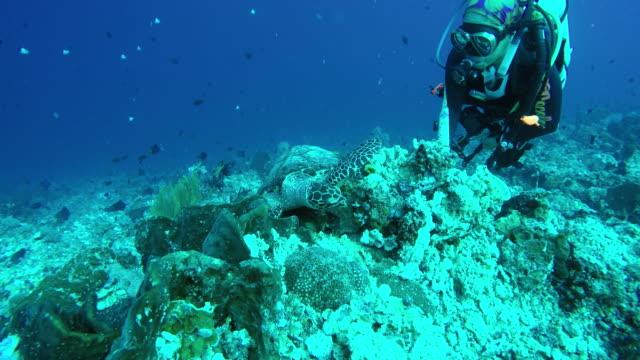 vídeos y material grabado en eventos de stock de turtle and woman scuba diver - submarinismo