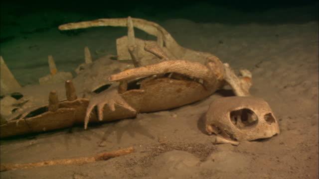 turtle, bones in cave, on sandy bottom, borneo, malaysia, southeast asia - 動物の骨点の映像素材/bロール