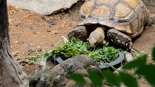 turtle eat vegetable - pinching stock videos & royalty-free footage