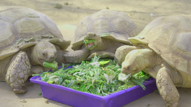 turtle eatting feed. - animal shell stock videos & royalty-free footage
