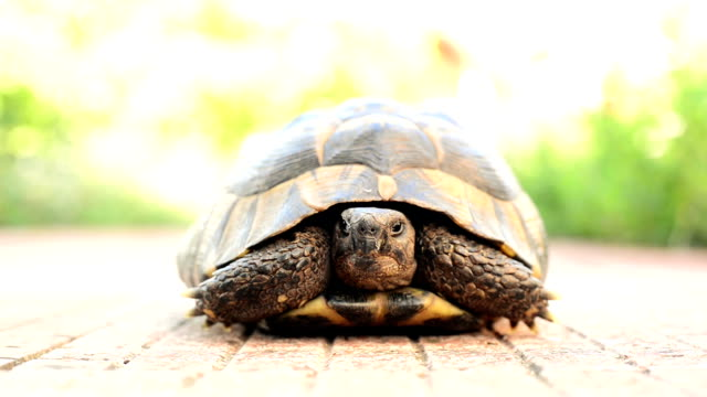 turtle hiding - animal shell stock videos & royalty-free footage