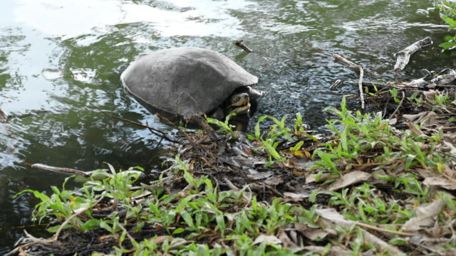 Turtle in the Pond with Beautiful Sunlight