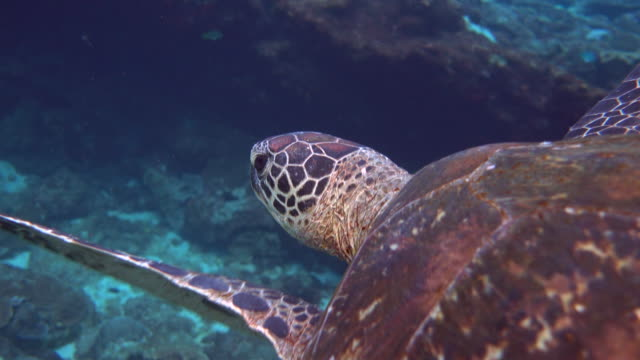 Turtle swimming over beautiful coral reef