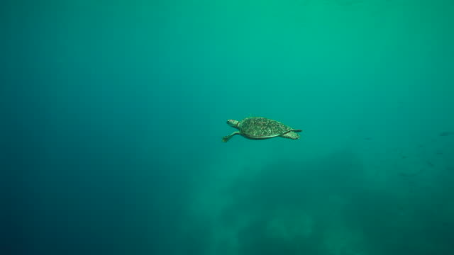 turtle swimming underwater / mozambique channel, mozambique, africa - swimming stock videos & royalty-free footage