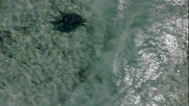 A turtle swims fast over the Great Barrier Reef. Available in HD.