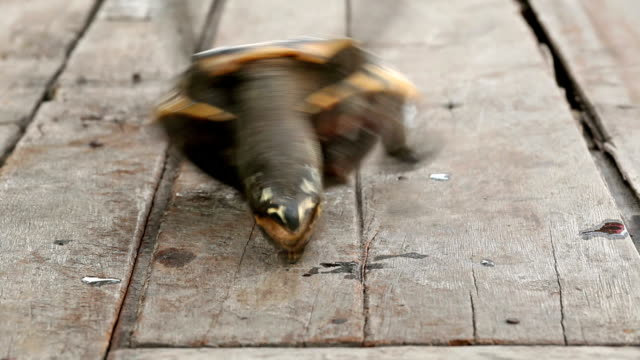 turtle upside down - upside down stock videos & royalty-free footage
