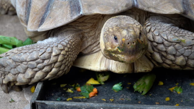 turtle - tortoise stock videos & royalty-free footage