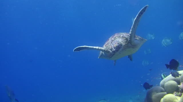 turtle - swimming stock videos & royalty-free footage