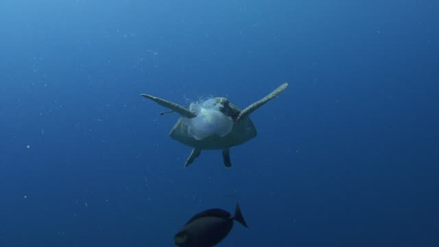 turtle - hawksbill turtle stock videos & royalty-free footage