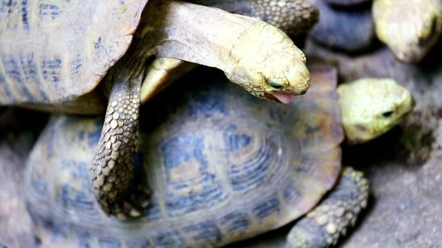 vidéos et rushes de tortue aquatique - organisme aquatique