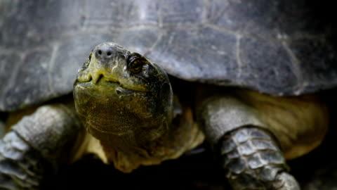 turtle - landschildkröte stock-videos und b-roll-filmmaterial
