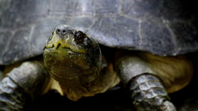 turtle - hiding stock-videos und b-roll-filmmaterial