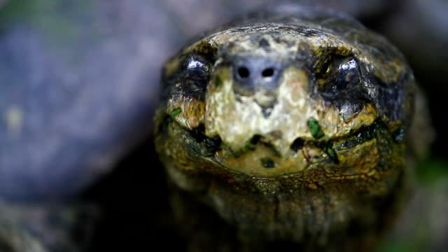 vídeos de stock e filmes b-roll de tartaruga - visão frontal