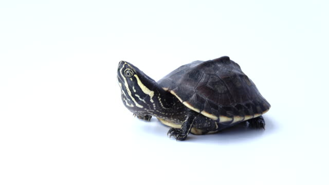 turtle - turtle shell stock videos & royalty-free footage