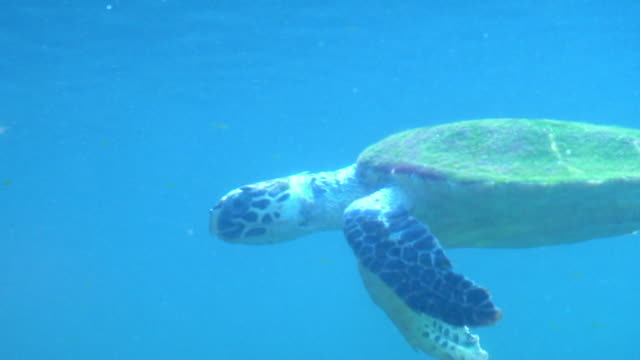 turtle - turtle stock videos & royalty-free footage