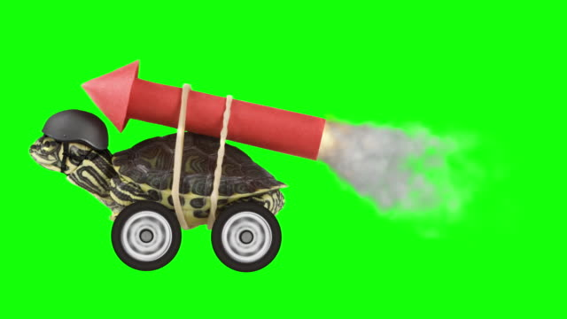 Turtle with a rocket on chroma key