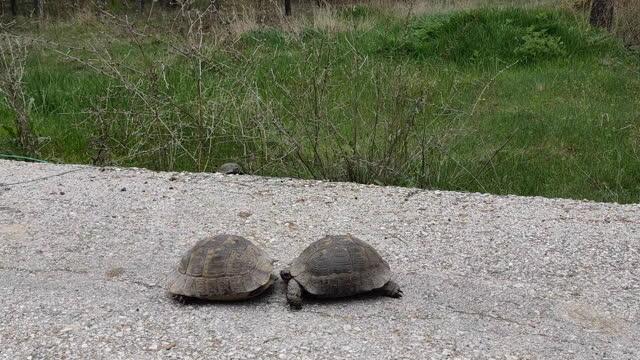 turtles - reptile stock videos & royalty-free footage