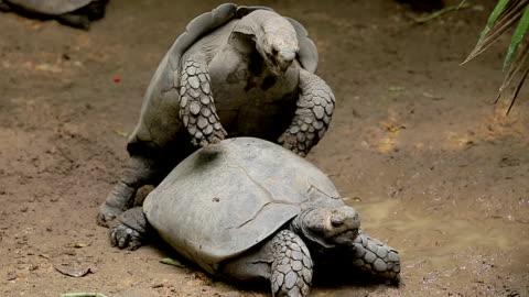 schildkröten. - landschildkröte stock-videos und b-roll-filmmaterial