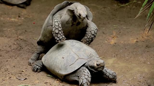 stockvideo's en b-roll-footage met turtles. - schildpad