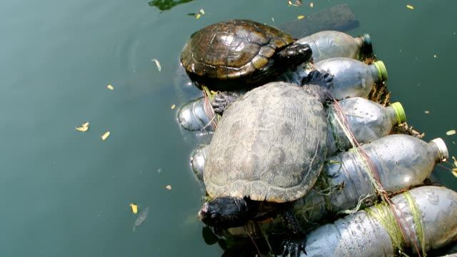 sköldpaddor - kräldjur bildbanksvideor och videomaterial från bakom kulisserna