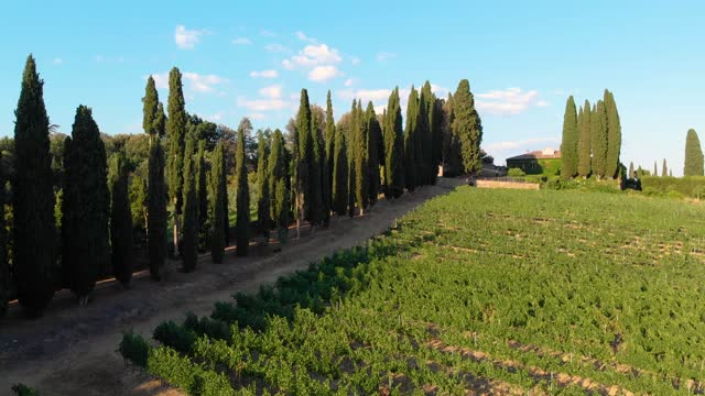 tuscan chianti vineyard from drone - farmhouse stock videos & royalty-free footage