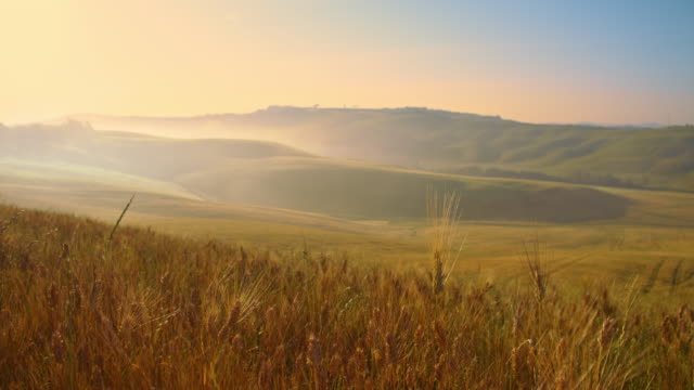 ds tuscan countryside in morning mist - ear of wheat stock videos and b-roll footage