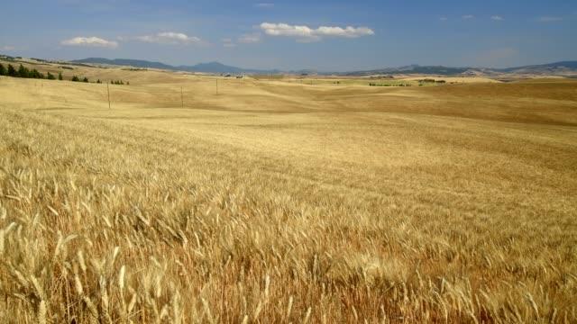 vídeos y material grabado en eventos de stock de tuscan countryside with wheat fields in summer, pienza, val d'orcia, siena province, tuscany, italy - trigo