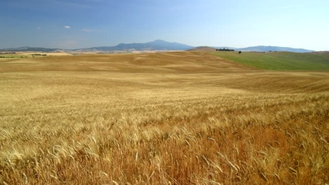 tuscan countryside with wheat fields in summer, pienza, val d'orcia, siena province, tuscany, italy - 小麦点の映像素材/bロール