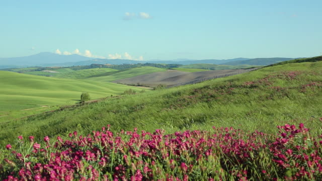 tuscany, blooming green hills landscape - wildflower stock videos & royalty-free footage