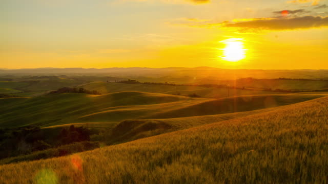 t/l tuscany countryside in the sunrise - wheat stock videos & royalty-free footage
