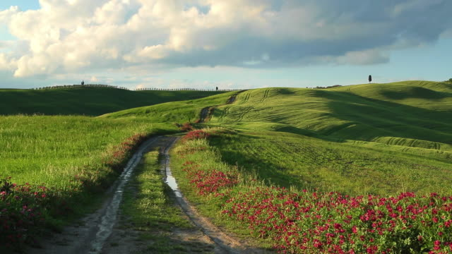tuscany, dirt road on the green hills in bloom - wildflower stock videos & royalty-free footage