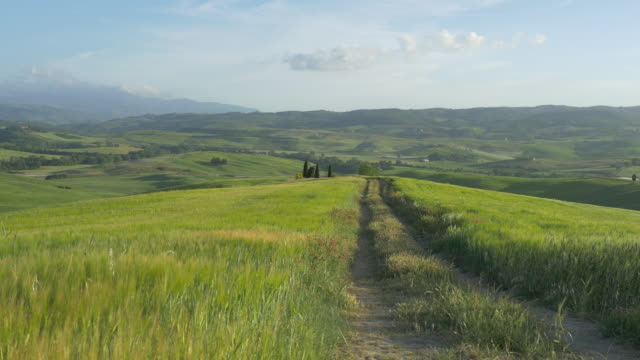 tuscany, dolly shot of a dirt grassy road going down of a hill - tuscany stock videos & royalty-free footage