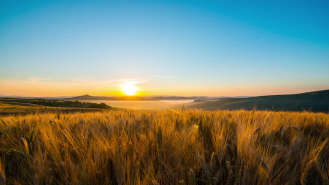 t/l 8k tuscany fields of wheat in the sunrise - tuscany stock videos & royalty-free footage