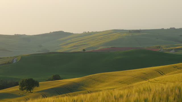 Tuscany, series of wheat fields and hills at sunset, dolly shot.